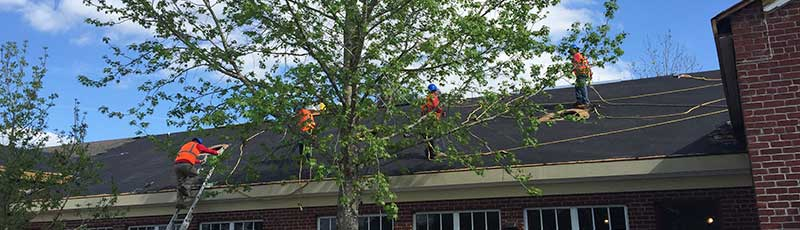 How to prepare your roof for the summer
